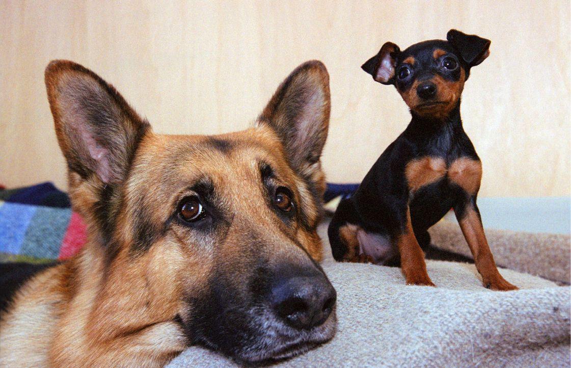 Rex und sein neuer Freund auf dem Kommissariat. - Bildquelle: Sat.1