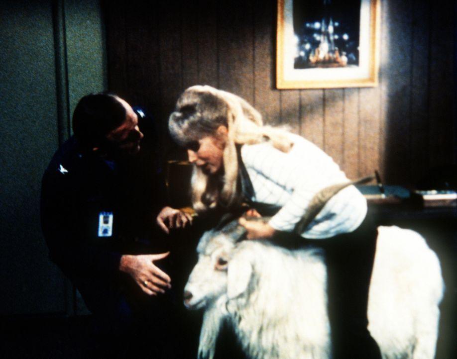 Dr. Bellows (Hayden Rorke, l.) besteht darauf, dass die Ziege, die Jeannie (Barbara Eden, r.) extra aus Tibet besorgt hat, aus Tonys Büro bei der NA... - Bildquelle: Columbia Pictures