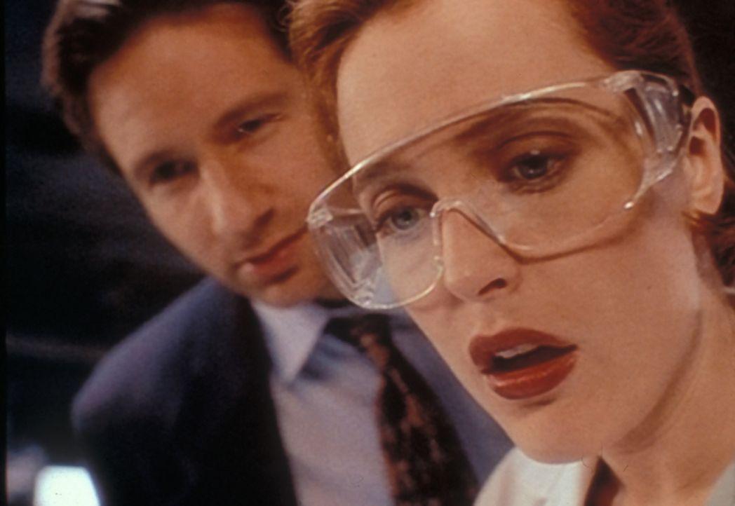 Scully (Gillian Anderson, r.) und Mulder (David Duchovny, l.) sind entsetzt, als ein Frosch aus der Bauchhöhle eines ermordeten Chinesen krabbelt, d... - Bildquelle: TM +   2000 Twentieth Century Fox Film Corporation. All Rights Reserved.