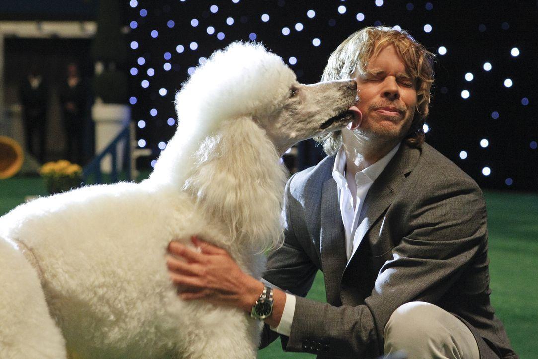 Bei den Ermittlungen in einem neuen Fall muss Deeks (Eric Christian Olsen) bei einer Hundeshow teilnehmen ... - Bildquelle: CBS Studios Inc. All Rights Reserved.