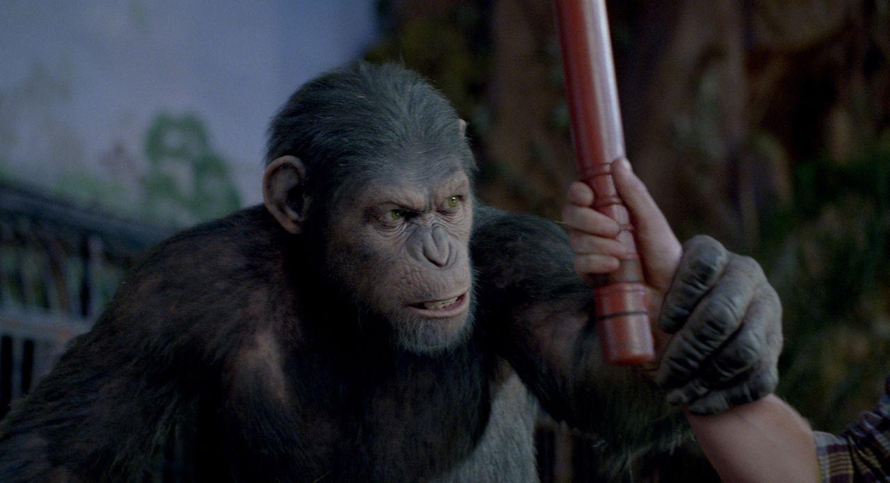 Als Caesar gegen Wills Willen in ein Tierheim abgeschoben wird, wo er der Willkür sadistischer Wärter ausgeliefert ist, sorgt er schon bald dafür, d... - Bildquelle: 2011 Twentieth Century Fox Film Corporation. All rights reserved.
