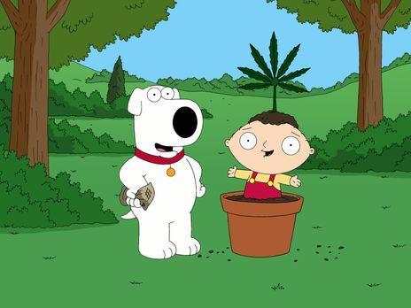 Family Guy - Als Brian (l.) wegen des Besitzes einer Kleinstmenge Marihuana v...