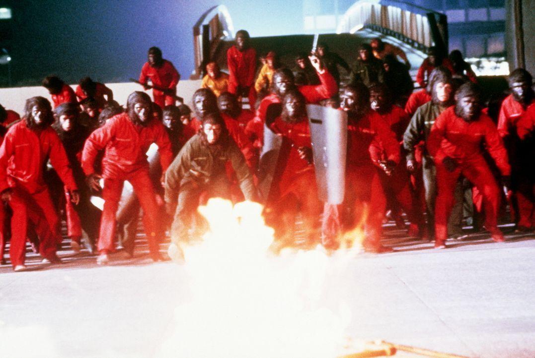 Die Affen unter der Leitung Cäsars (Roddy McDowall, M.), proben den Aufstand ... - Bildquelle: Twentieth Century-Fox Film Corporation