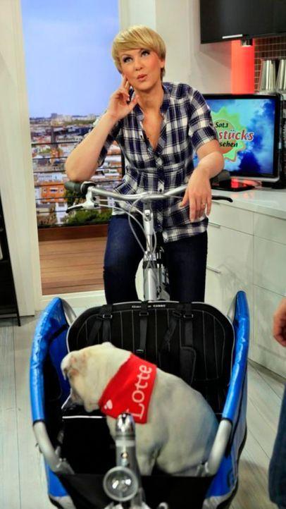 fruehstuecksfernsehen-studiohund-lotte-in-action-im-studio-007 - Bildquelle: Ingo Gauss