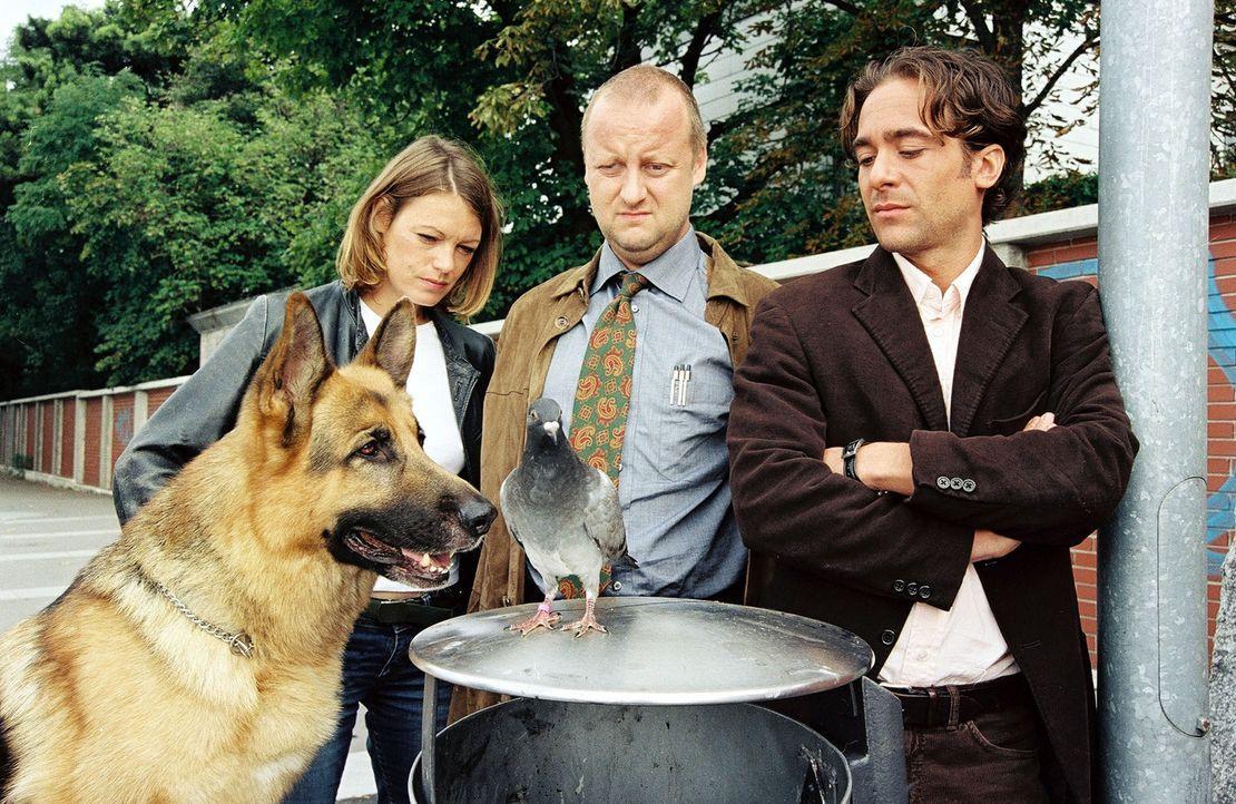 Diesmal müssen Marc (Alexander Pschill, r.), Niki (Elke Winkens, l.), Kunz (Martin Weinek, M.) und Rex in einem reichlich ungewöhnlichen Fall ermi... - Bildquelle: Sat.1