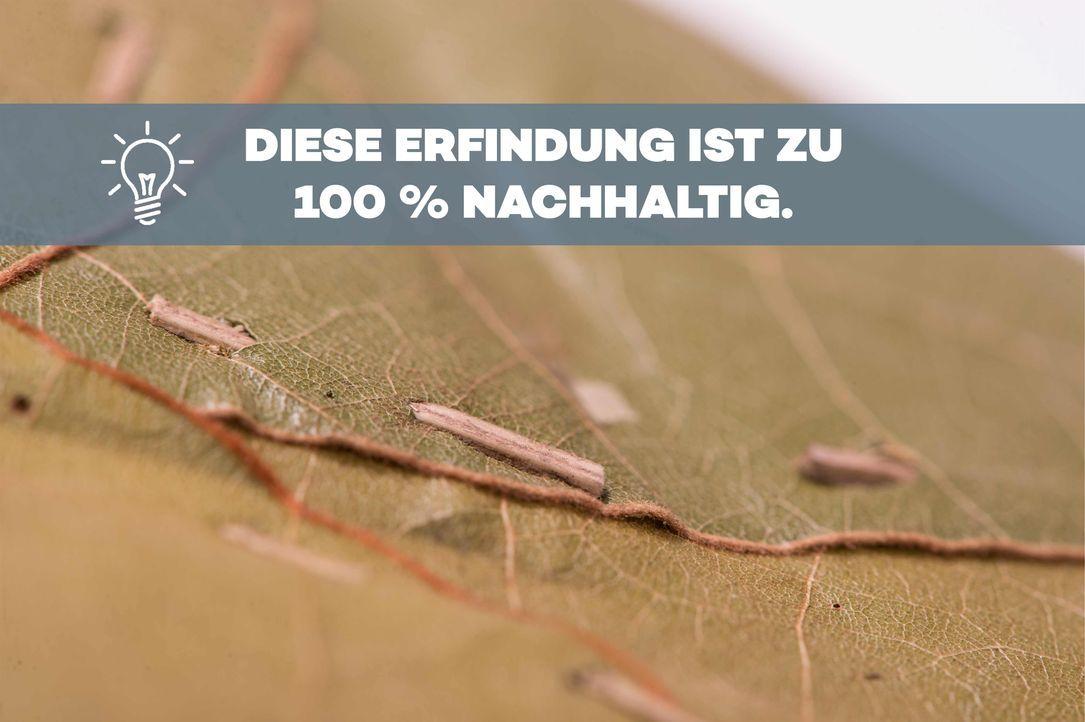 P7_DasDing_3_BU - Bildquelle: ProSieben/Willi Weber