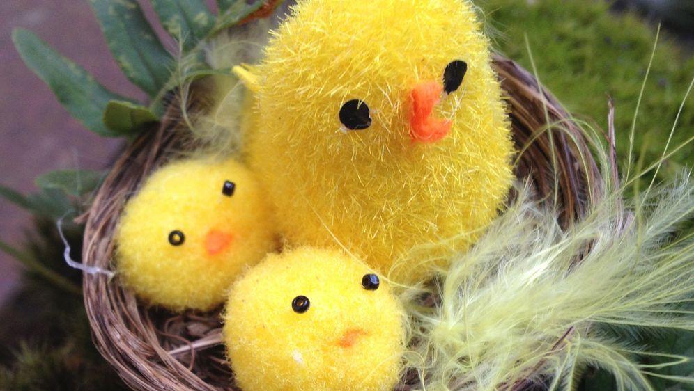 Osterküken Basteln Aus Wolle Watte Und Papier Sat 1 Ratgeber