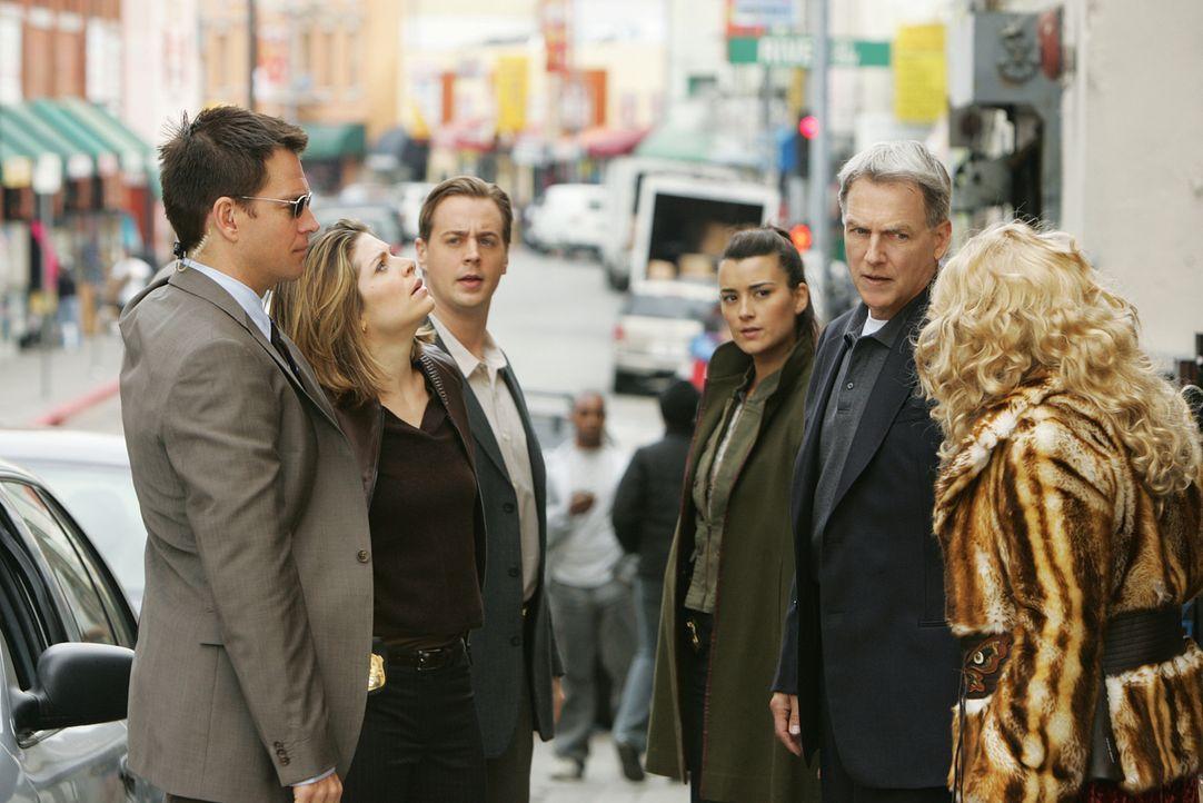 Stehen vor einem Rätsel: Gibbs (Mark Harmon, 2.v.r.), Tony (Michael Weatherly, l.), Ziva (Cote de Pablo, 3.v.r.), McGee (Sean Murray, 3.v.l.) und De... - Bildquelle: CBS Television