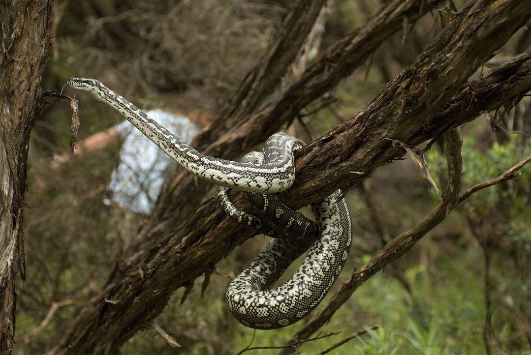 Mutter Natur und ihre Kreaturen gehen eiskalt gegen die menschlichen Eindringlinge vor ... - Bildquelle: Arclight Films