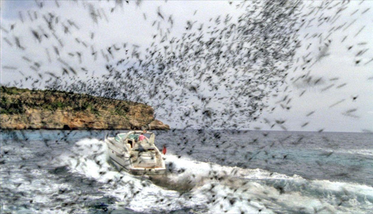 Auf der schönen Balearen-Insel Mallorca attackieren aggressive Bienenschwärme Menschen und Tiere. - Bildquelle: Wasabi Film/TRIXTER Sat.1