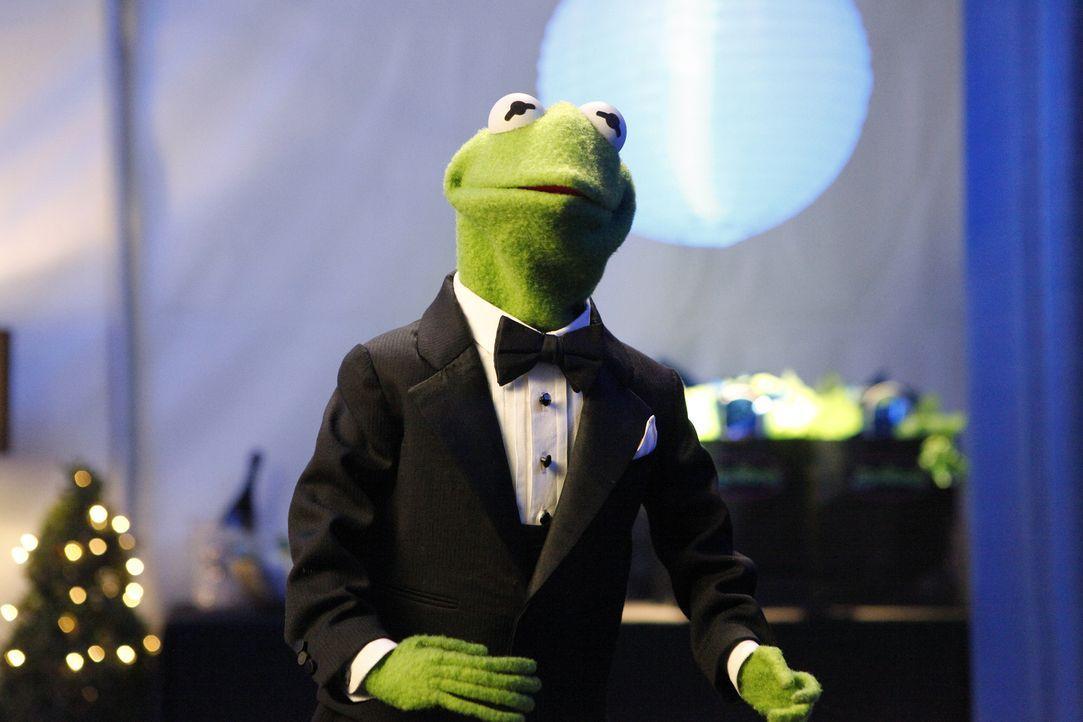 Begleitet Miss Piggy zu einer Filmpremiere: Kermit ... - Bildquelle: Nicole Wilder ABC Studios
