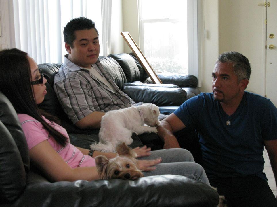 Jeff (M.) und Kelly (l.) haben sich beim ersten Blick in einen Hund namens Kaylie verliebt. Das neurotische Verhalten des Tieres wurde jedoch mit de...