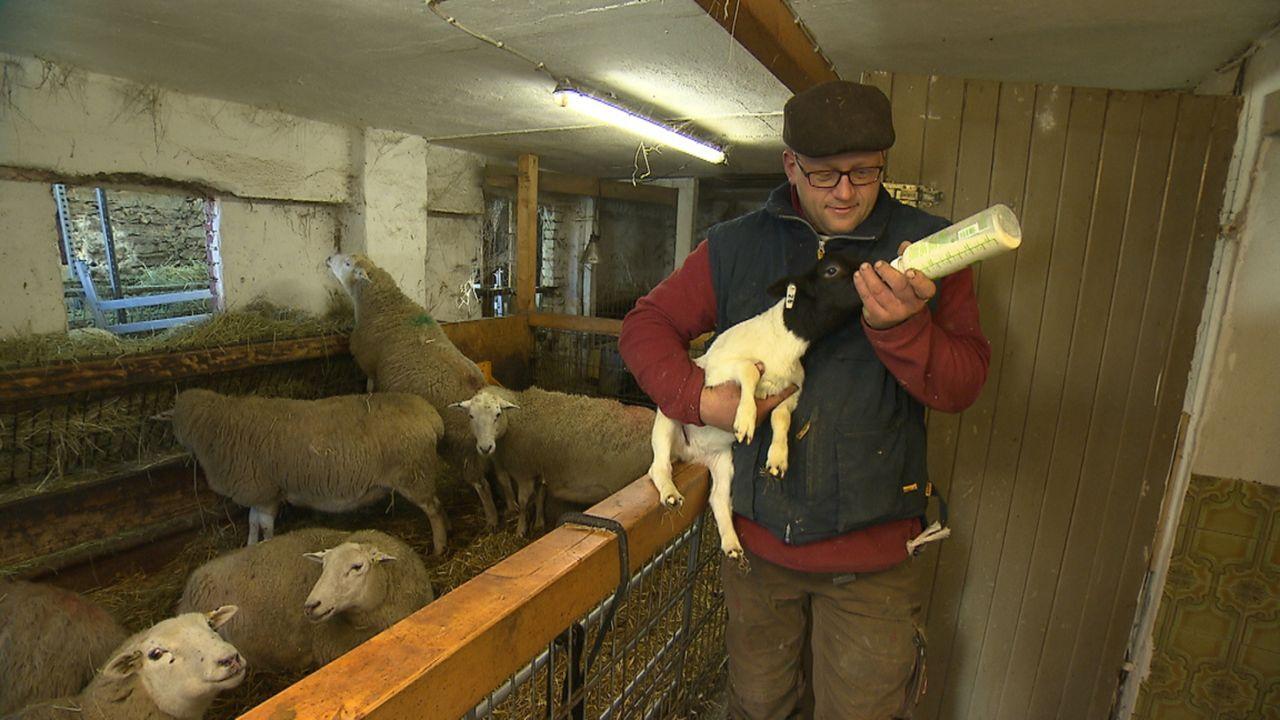Sascha Hoffmann aus Rheinland Pfalz bringt gemeinsam mit seinem Freund Karsten Preuss an drei Tagen etwa 100 Dorper-Lämmer zur Welt. Andrea Kaiser s... - Bildquelle: SAT.1