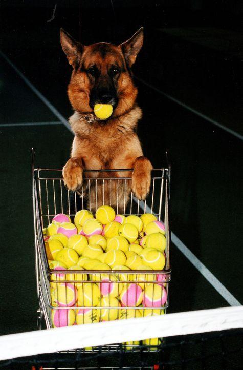 Rex - immer am Ball ... - Bildquelle: Sat.1