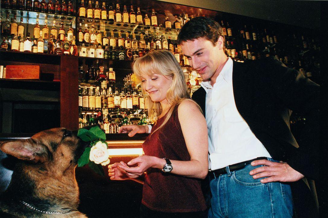 Nach getaner Arbeit führt Kommissar Brandtner (Gedeon Burkhard, r.) seine attraktive Kollegin Nina Wallentin (Eva Herzig, l.) in eine Bar aus. Rex präsentiert eine Rose ...