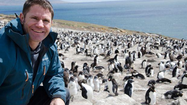 Auf den Falklandinseln entdeckt Steve Backshall Felsenpinguine ... © Scott Al...