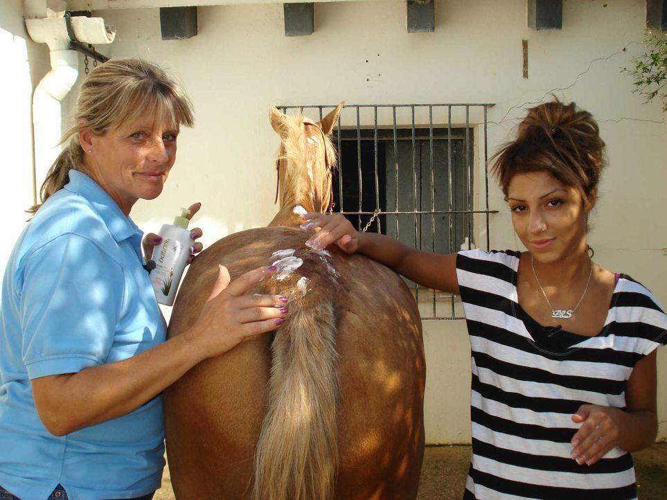 Wird die 17-jährige Shiva (r.) auf der Hacienda im andalusischen Torrecera endlich begreifen, dass das Leben kein Ponyhof ist? - Bildquelle: kabel eins