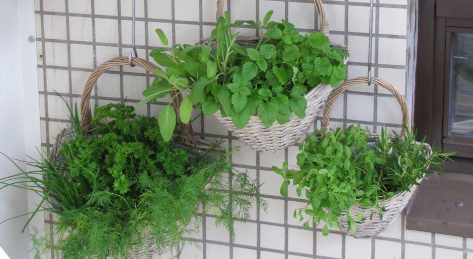 kräuter auf dem balkon: pflanzung und pflege - sat.1 ratgeber, Gartengerate ideen