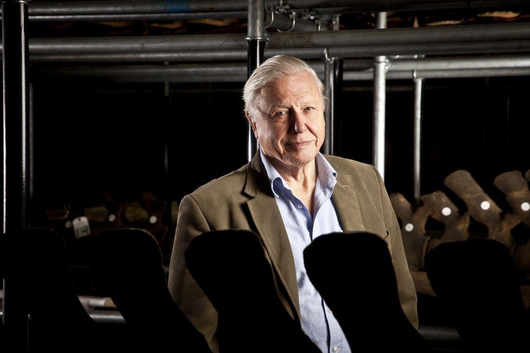 Der britische Tierfilmer Sir David Attenborough blickt zurück auf 60 Jahre Reisen zu den atemberaubensten und spannensten Tieren der Welt. - Bildquelle: BBC