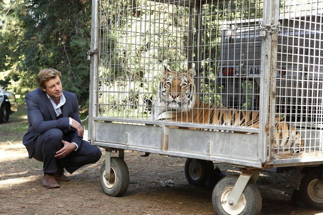 Der reiche Autohändler Archer Braddock wird in einem Waldgebiet tot in einer Erdmulde  aufgefunden. Ein aus einem Gehege ausgebrochener Tiger hatte... - Bildquelle: Warner Bros. Television