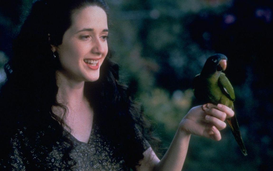 Nach einer langen, mühseligen Suche findet der intelligente Papagei Paulie (r.) endlich seine beste Freundin Marie (Trini Alvarado, l.) wieder ... - Bildquelle: DreamWorks