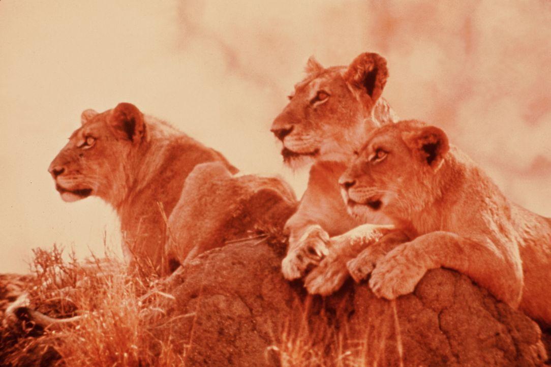 Eine Fülle der schönsten Landschafts- und Tieraufnahmen von ungewöhnlicher Qualität, exotisch, abenteuerlich und staunenswert zugleich werden gezeig... - Bildquelle: Warner Bros. Pictures