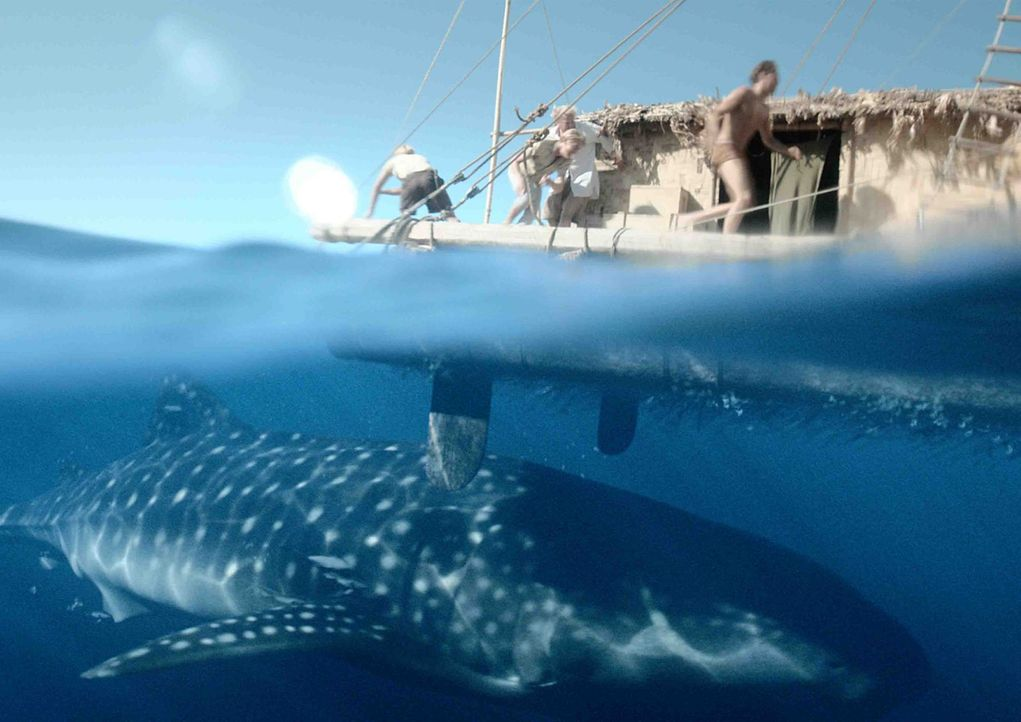 Ist der Wal gefährlich für das Boot und die Crew oder reagiert sie über? - Bildquelle: DCM Film Distribution GmbH