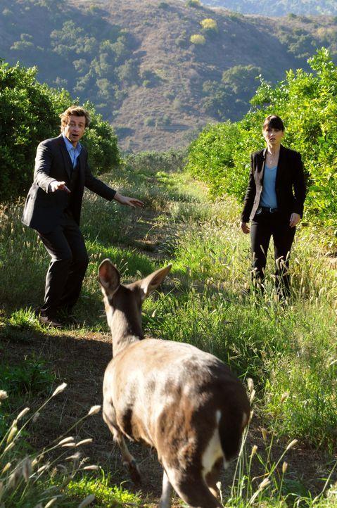 Nachdem in einer Obstplantage mehrere Leichen gefunden wurden, beginnen Teresa (Robin Tunney, r.) und Patrick (Simon Baker, l.) mit den Ermittlungen... - Bildquelle: Warner Bros. Television
