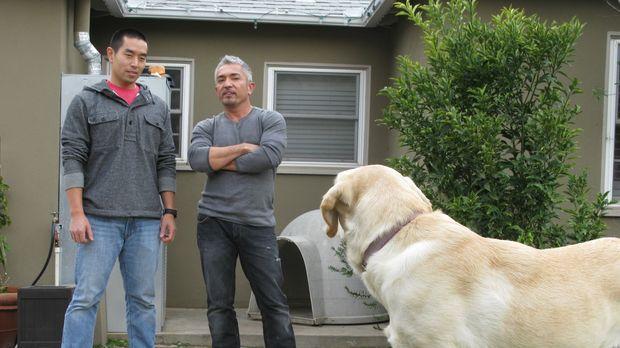 Als Cesar (r.) das Zuhause der Familie Lai in Los Angeles betritt, ahnt er ni...