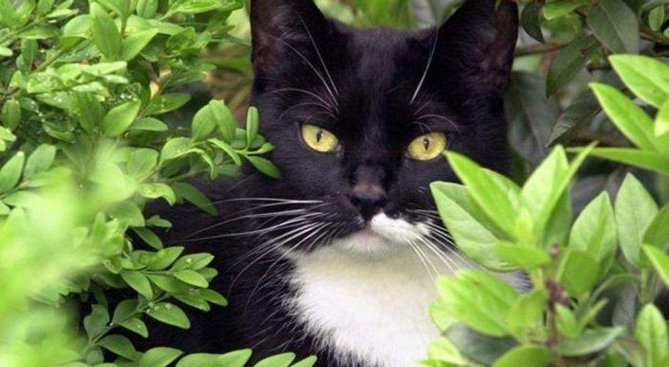 Katze Aus Garten Vertreiben Mit Hausmitteln Sat1 Ratgeber
