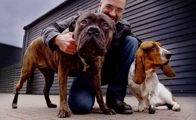 Noel Fitzpatrick und sein Team geben verletzten und kranken Hunden die Möglichkeit, wieder ein relativ normales Leben zu führen ... - Bildquelle: Zodiak Rights 2015
