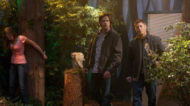 Kämpfen wieder gemeinsam gegen das Böse: Sam (Jared Padalecki, r.) und Dean W...