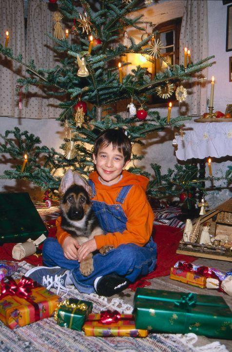 Benny Nachmann (Raphael Ghobadloo) und Rex feiern ihr erstes gemeinsames Weihnachten. - Bildquelle: Ali Schafler SAT.1