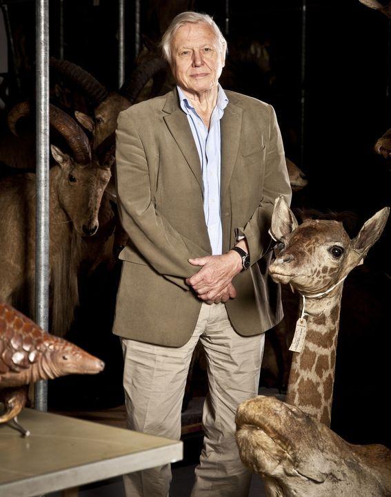 David Attenborough blickt zurück auf die spannendsten wissenschaftlichen Entdeckungen unseres Lebens auf der Erde. Wie und wo begann das Leben? Wie... - Bildquelle: Emilie Sandy BBC
