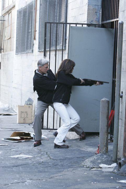Ari ist wieder in der Stadt und diesmal hat er sich das Ziel gesetzt Gibbs (Mark Harmon, l.) zu töten. Kate (Sasha Alexander, r.) erhält den Auftr... - Bildquelle: CBS Television