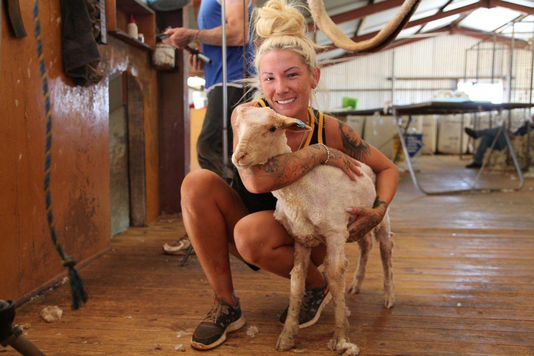 Bei 40 Grad, Insekten und Gestank, verdient sich Erotiksternchen Mareike beim Schafe scheren im Outback Australiens ihr Geld ... - Bildquelle: kabel eins