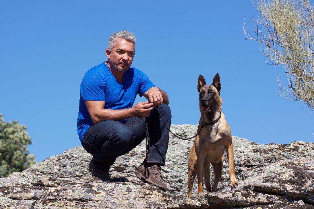 Cesar Millan macht es sich zur Aufgabe, Janna zu heilen, ihm neue Motivation zu geben und schließlich auch den perfekten Besitzer zu finden ... - Bildquelle: Belén Ruiz Lanzas 360 Powwow, LLC / Belén Ruiz Lanzas