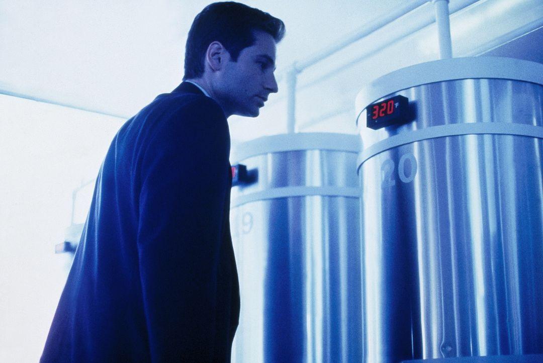 Im Labor eine verstorbenen Wissenschaftlers macht Mulder (David Duchovny) eine äußerst interessante Entdeckung ... - Bildquelle: TM +   Twentieth Century Fox Film Corporation. All Rights Reserved.
