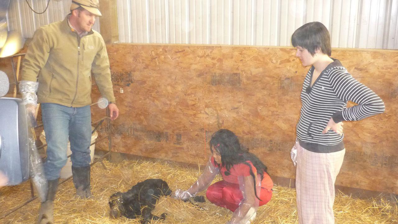Die Teenies Anna (r.) und Pisei (M.) helfen bei einer Kälbchengeburt auf der Ranch in Montana ... - Bildquelle: kabel eins