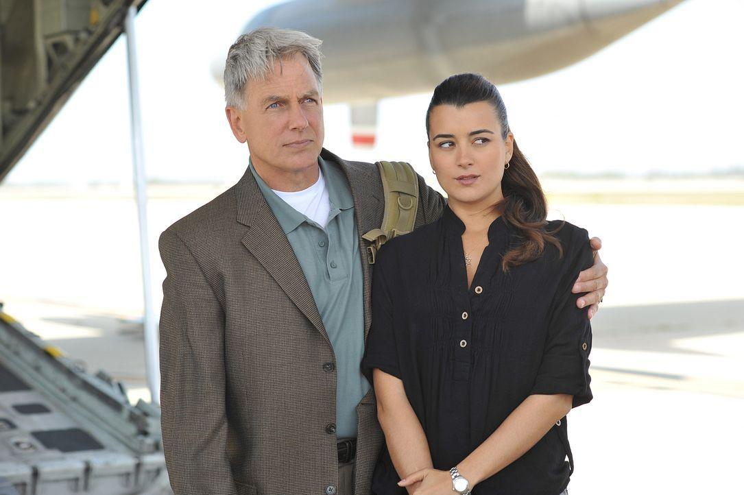 Stehen vor einem Rätsel: Gibbs (Mark Harmon, l.) und Ziva (Cote de Pablo, r.) ... - Bildquelle: CBS Television