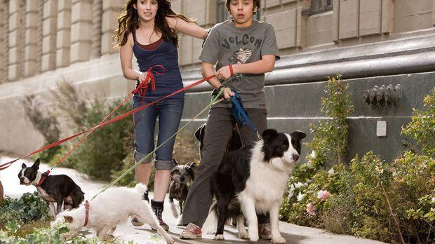 Das Hundehotel - Versuchen alles, um ihre Hunde samt Herberge zu retten Andi...