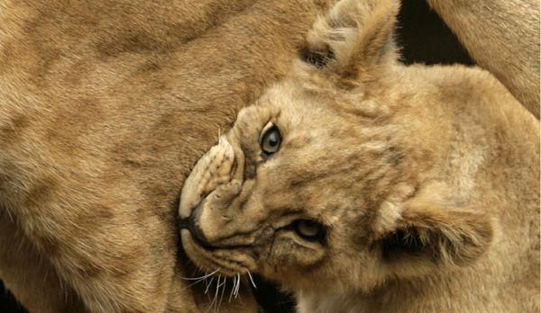 Afrika16 - Bildquelle: dpa