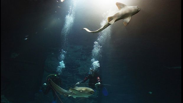 verschiedene Hai-Arten