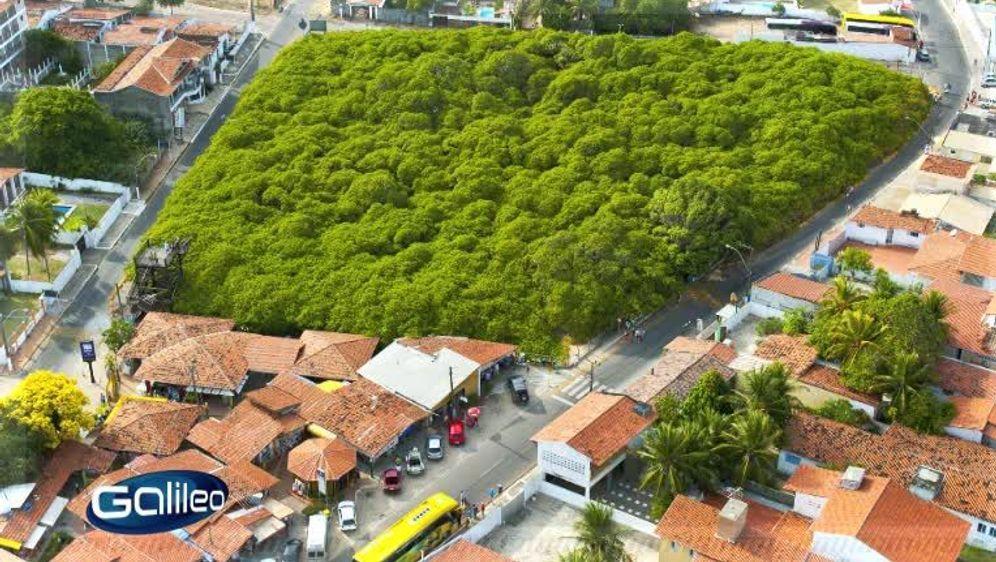 Bildgeschichte: Einbaumpark