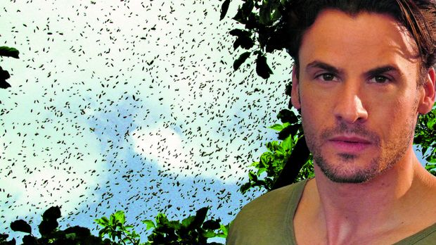 Sheriff Lydon Harris (C. Thomas Howell) muss sich mit unzähligen Killerbienen...