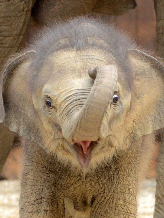 elephant-11-05-31-AFP - Bildquelle: AFP