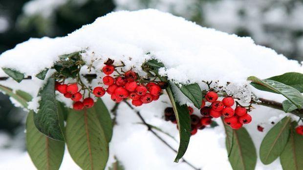 Gartenarbeit Dezember Pixabay