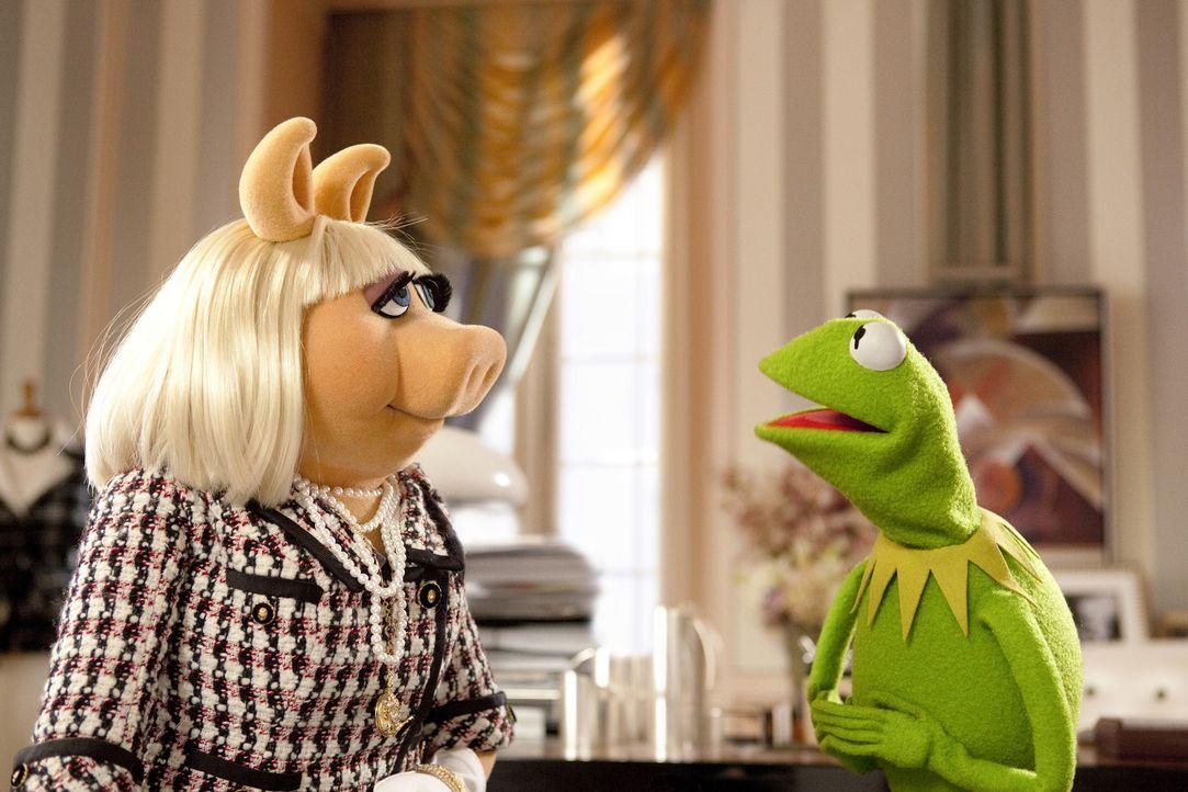 Nach jahrelanger Funkstille finden Kermit (r.) und Miss Piggy (l.) wieder zusammen. Gemeinsam wollen sie die Muppets Show wieder zum Leben erwecken... - Bildquelle: The Muppets Studio, LLC. All rights reserved
