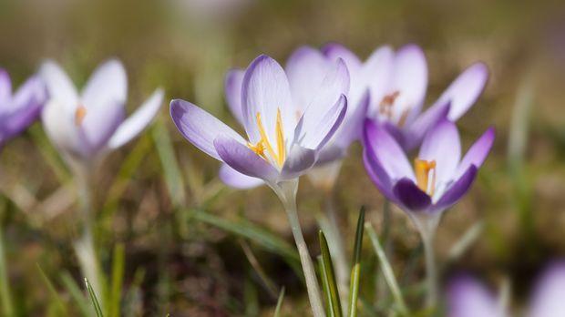 Gartenarbeit im märz  Gartenarbeit im März - SAT.1 Ratgeber