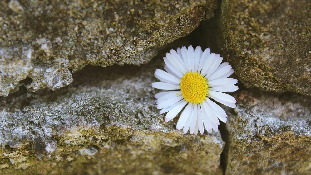 Ziermauer: Ein Highlight im Garten bauen - Bildquelle: Pixabay.com